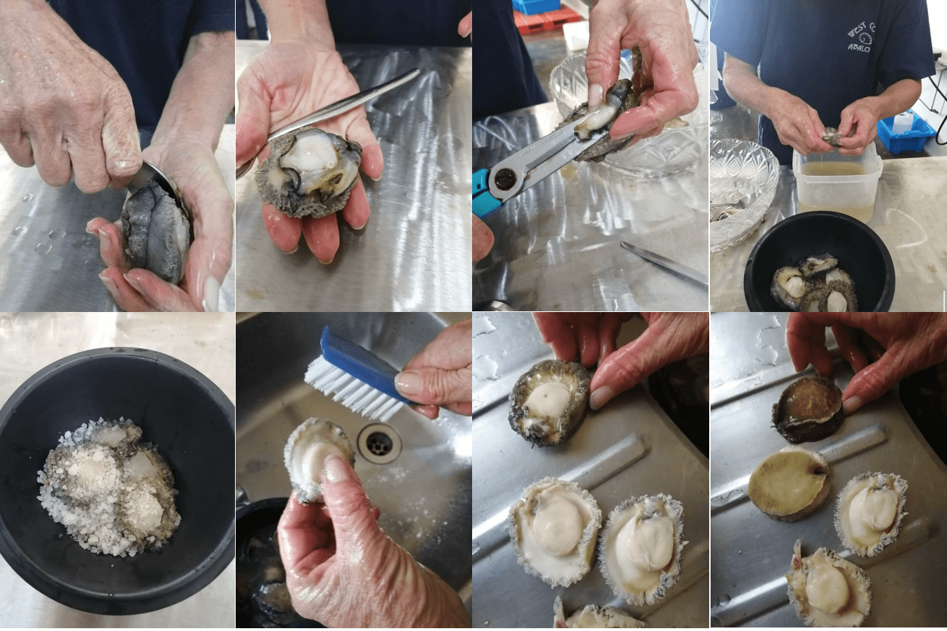 7 Easy Steps To Shucking Abalone